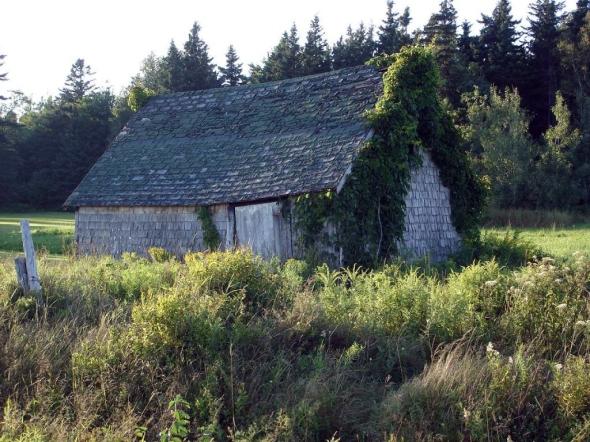 Dugspr Home for Good_PEI photo (1)