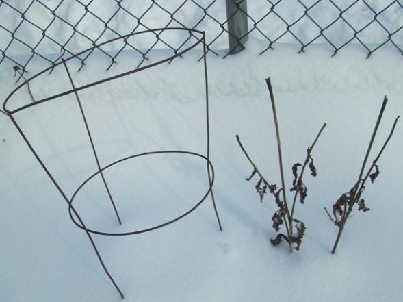 Snow Poems 6