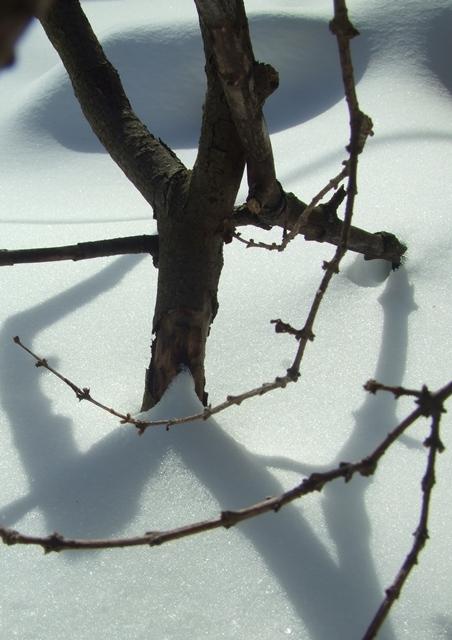 Naturaleza muerta del invierno, febrero de 2013, Toronto_Winter still life, February 2013, Toronto
