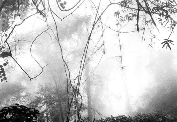 Untitled_photograph © photographer An-My Lê, born 1960