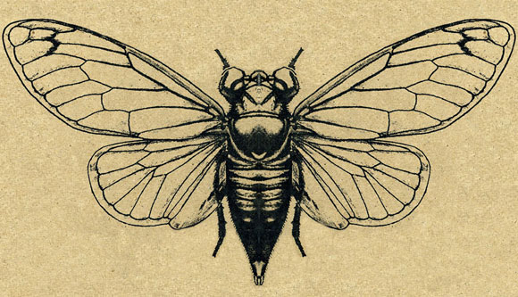 mar a elena walsh como la cigarra like the cicada z calo poets. Black Bedroom Furniture Sets. Home Design Ideas