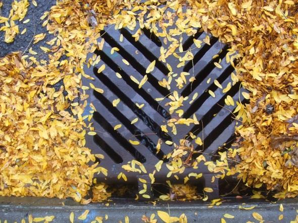 Hojas de otoño 2_octubre de 2013_Toronto