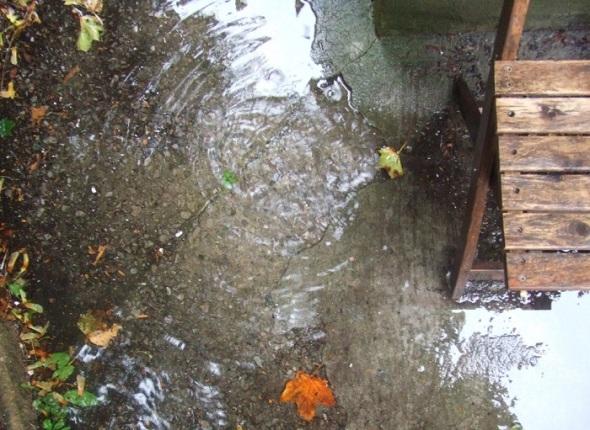 ZP_Jaime Sabines_Me gustan los aletazos de la lluvia sobre los lomos de la ciudad flotante...