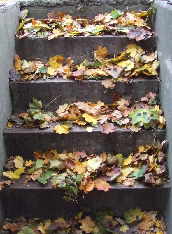 November 11th 2013_Falllen Autumn Leaves in Toronto