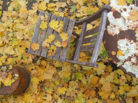 November 2013_Fallen Leaves_Toronto, Canada
