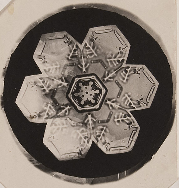 Wilson Alwyn Bentley_Snowflake circa 1905