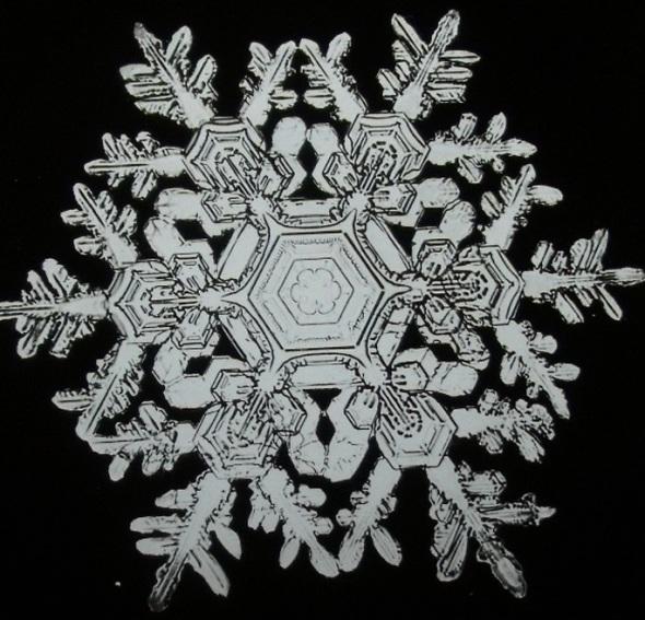 Wilson Alwyn Bentley_Snowflake