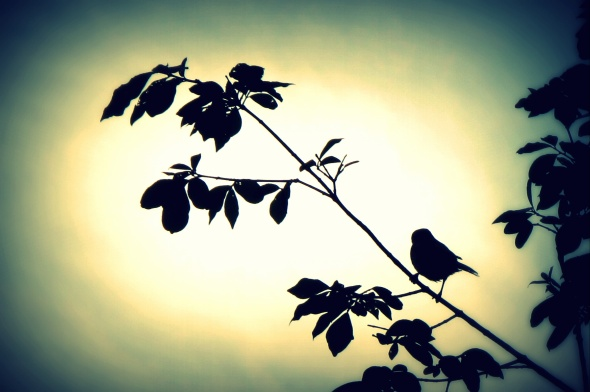 """Songbird"": a photograph by Laboni Islam"