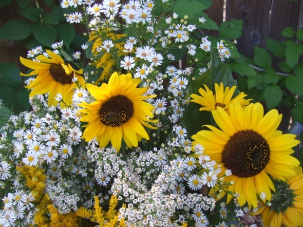 An End of Summer bouquet in a watering can_Goldenrod_Asters_Sunflowers_September 2014