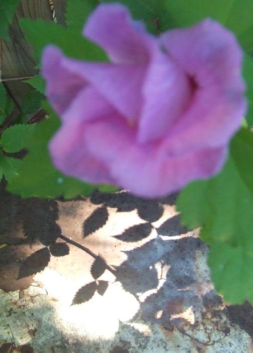 Flor_un poema de  Amor