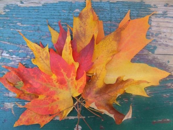 Las primeras hojas han cambiado sus colores_Otoño en Toronto