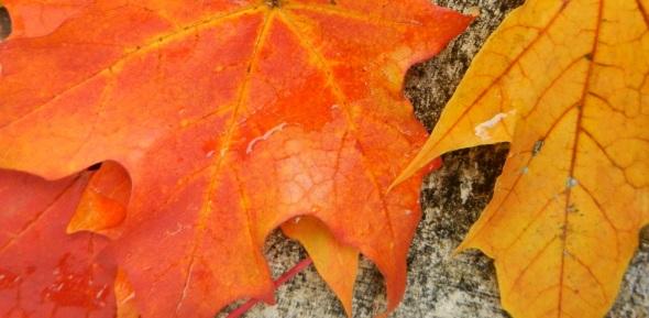 Feuilles dAutomne numero 2_octobre de 2014_Toronto