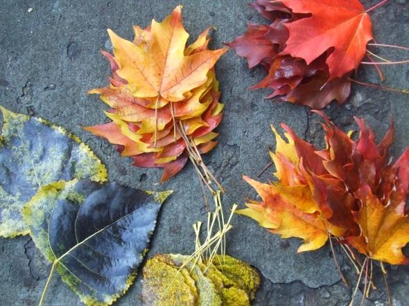 Hojas caídas y recolectadas_Fallen leaves gathered...Toronto_octubre de 2014