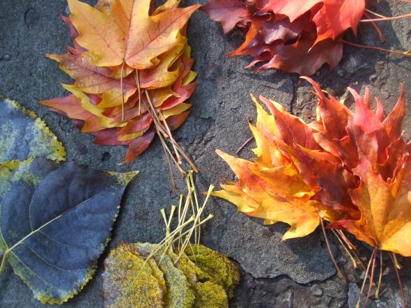 Hojas caídas y recolectadas_octubre de 2014_Toronto_Canadá
