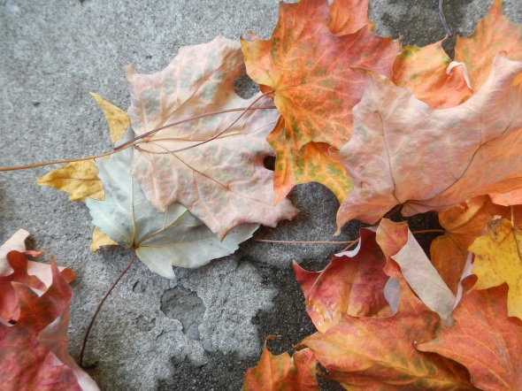 Hojas de octubre 2_Toronto 2014