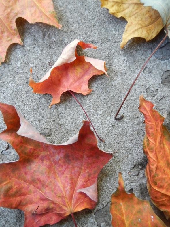 Hojas de octubre_Toronto 2014