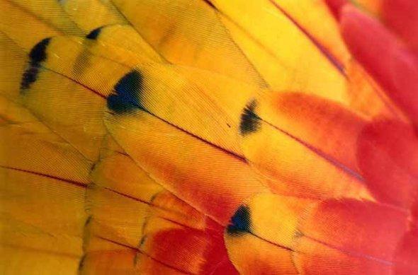 Ala de una mariposa andina_fotógrafo Jorge Gajardo Rojas