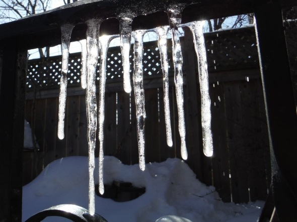 March 5th 2015_Icicles_Riverdale Toronto Canada