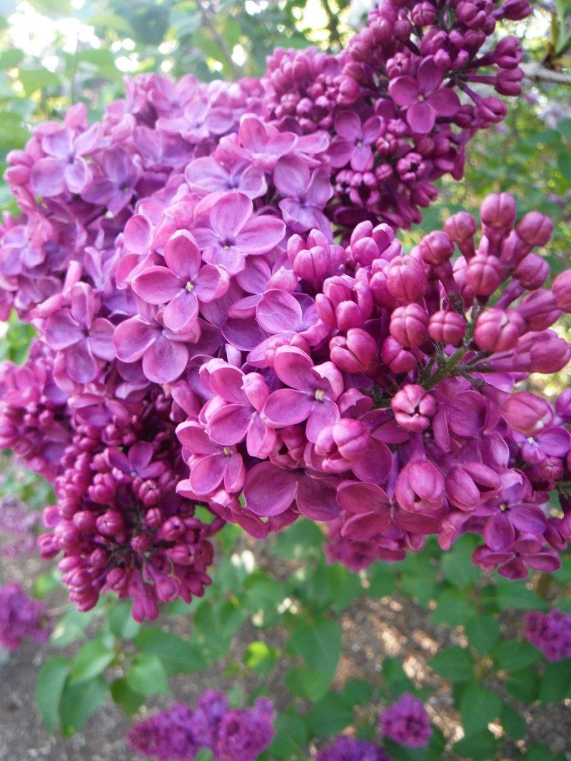 Abri De Jardin Riaz > French Z Calo Poets Page 2