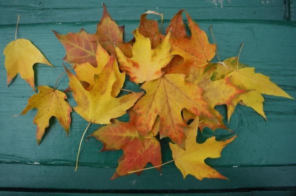 6 de octubre 2015_primeras hojas que cambian de color_Toronto