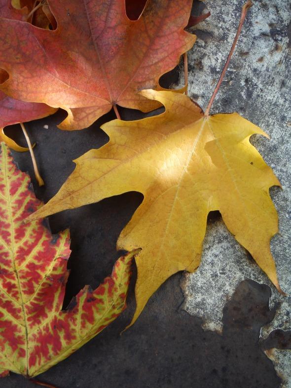 Hojas de octubre en Toronto_14.10.2015_B