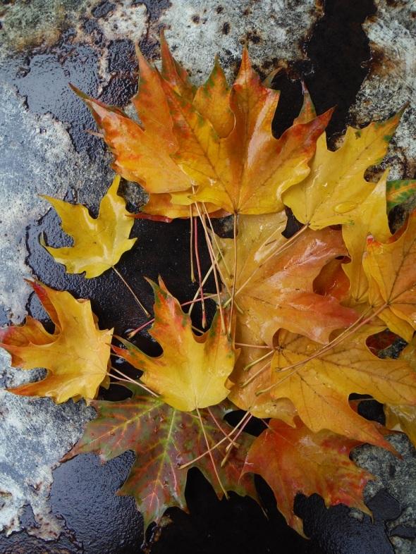 Hojas de octubre en Toronto_9 de octubre 2015