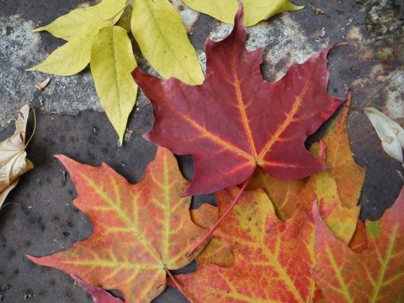Hojas de octubre_Toronto_14_10_2015