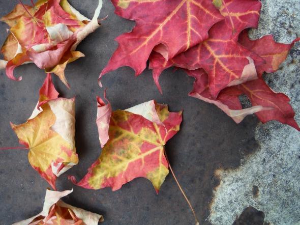 Hojas de octubre_Toronto_21.10.2015_A
