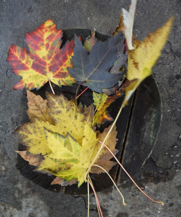 Autumn Leaves 2_Toronto_November 6th 2015