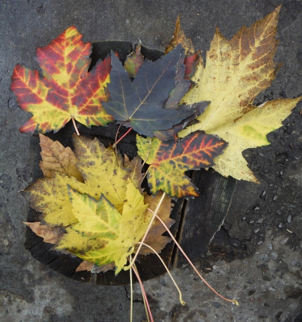 Autumn Leaves_Toronto_November 6th 2015