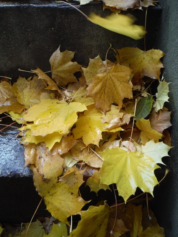 Fallen Leaves_November 6th 2015_Toronto