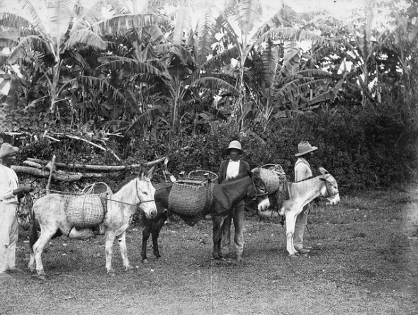 Peasants with their mules_Jamaica_early 20th century photograph